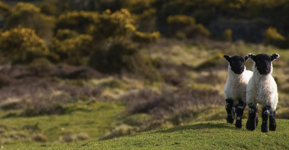 Keeping everyone safe and happy on Dartmoor!