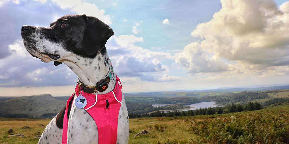 Bringing your dog to Dartmoor