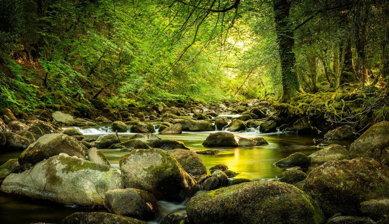 We Love Dartmoor!
