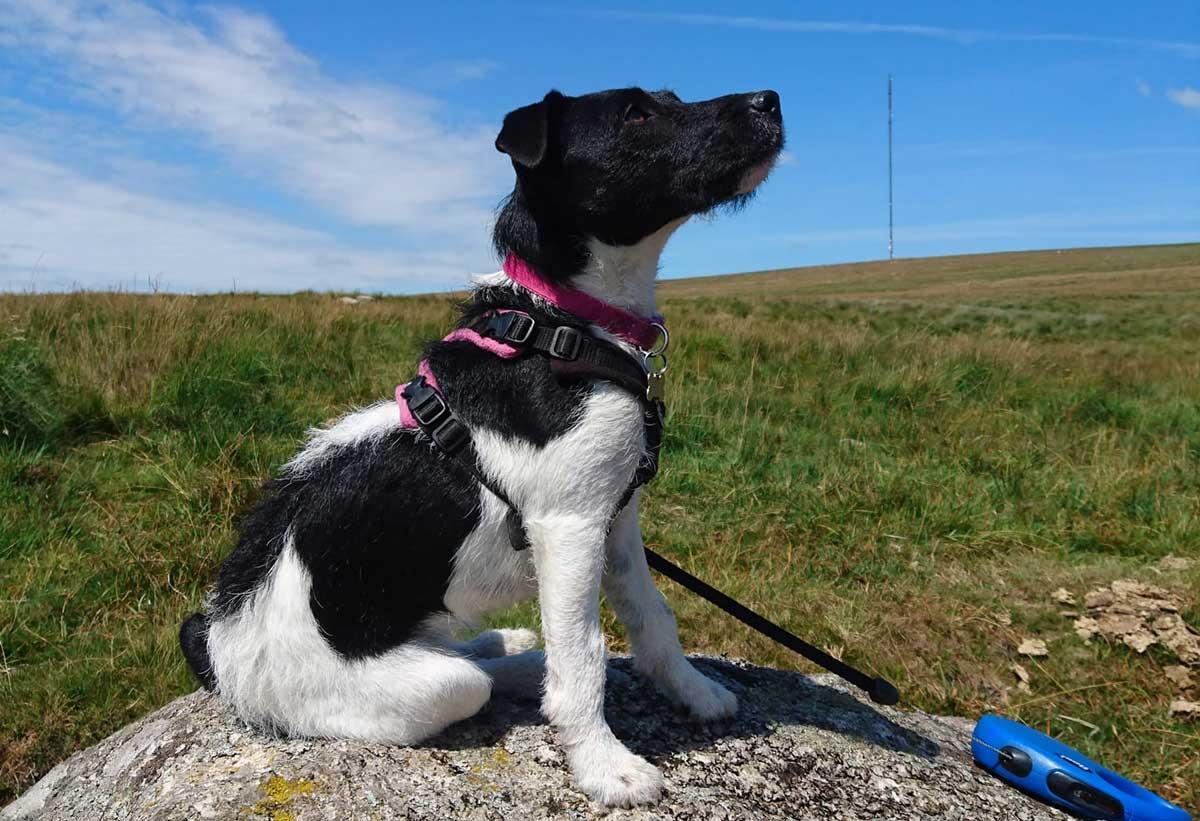 dog-on-lead