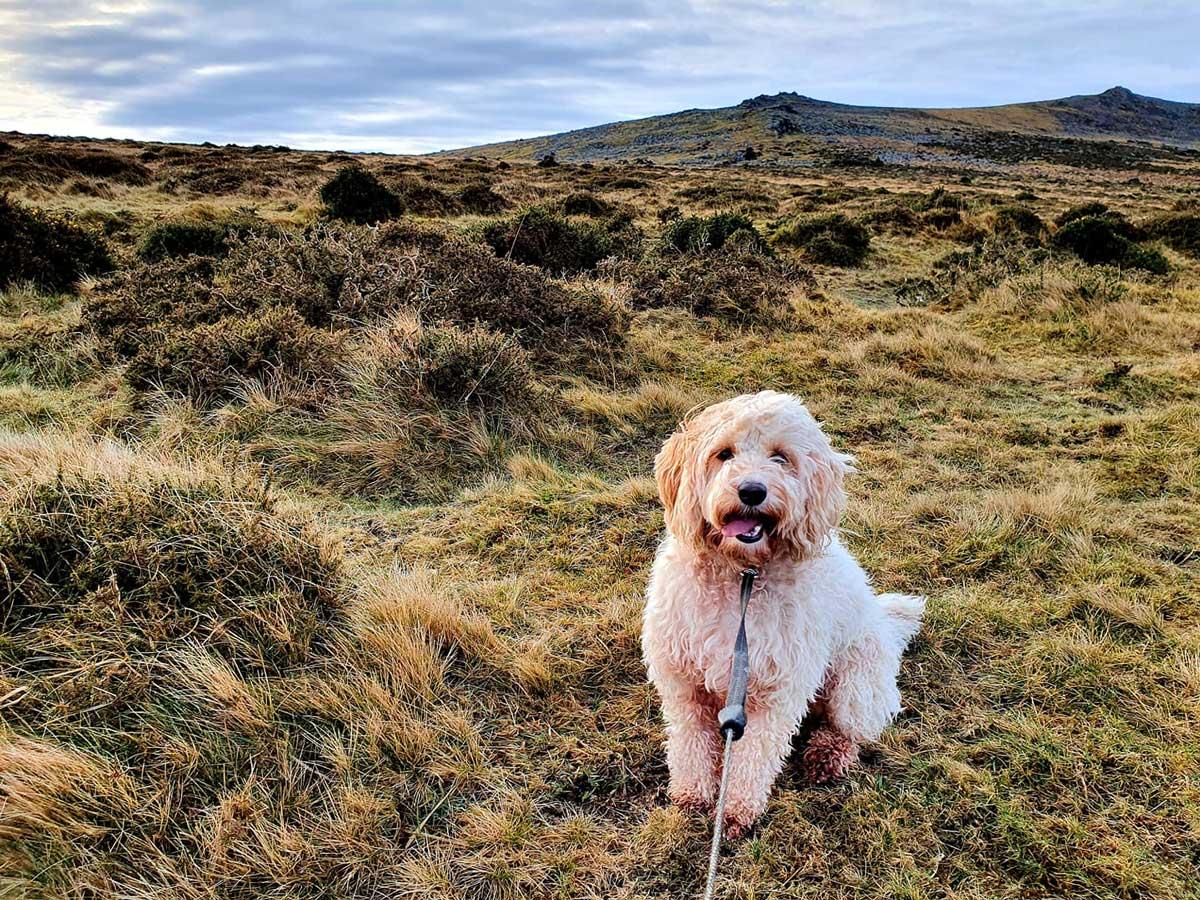 shaggy-dog-on-lead