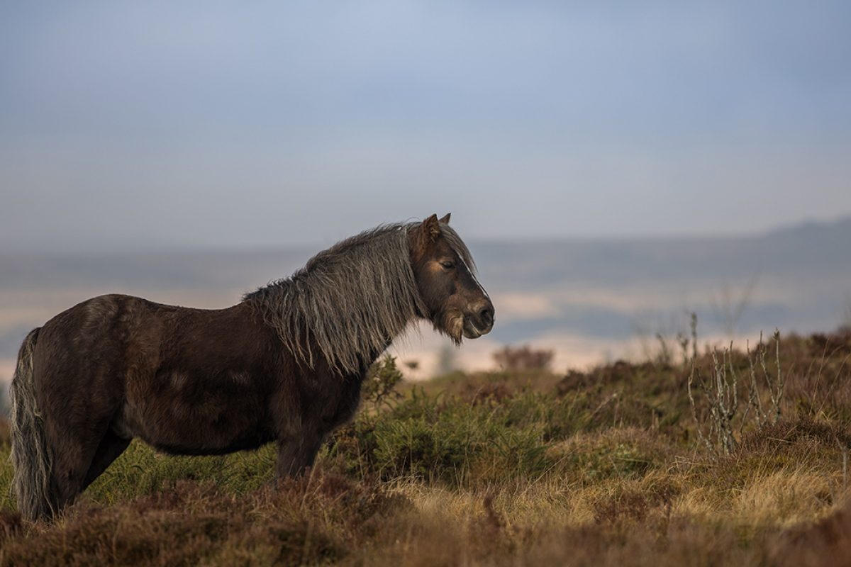 Malcolm-pony2