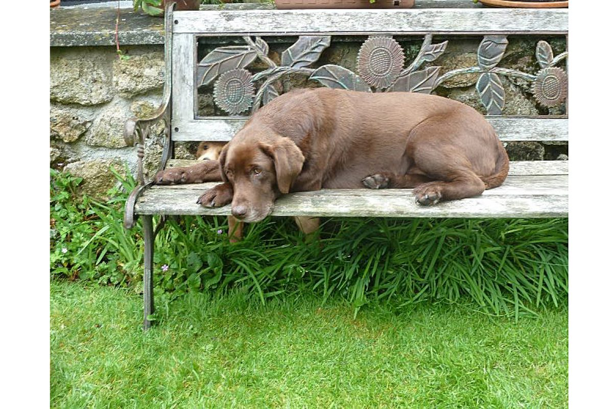 daisy-on-bench
